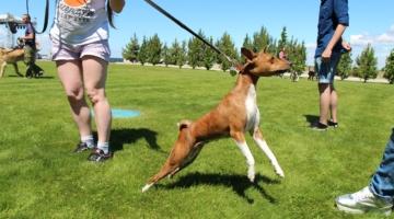 Майстер-клас з фізичної підготовки собак до виставки, Кінологічний центр Антеус, Національного парку Межигір'я