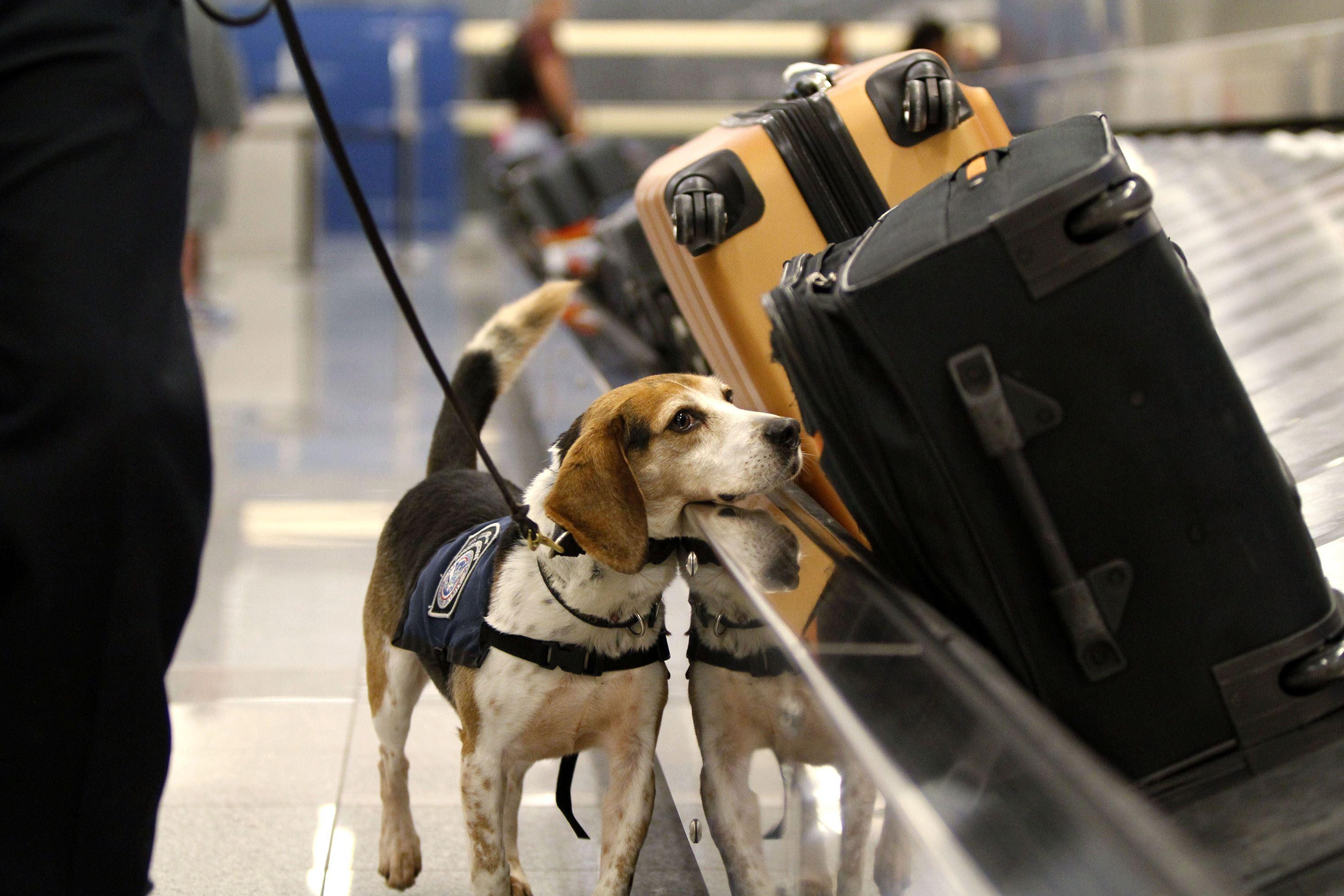 Відкриті змагання спеціальних розшукових собак на «Кубок співдружності» у Національному парку Межигір'я.
