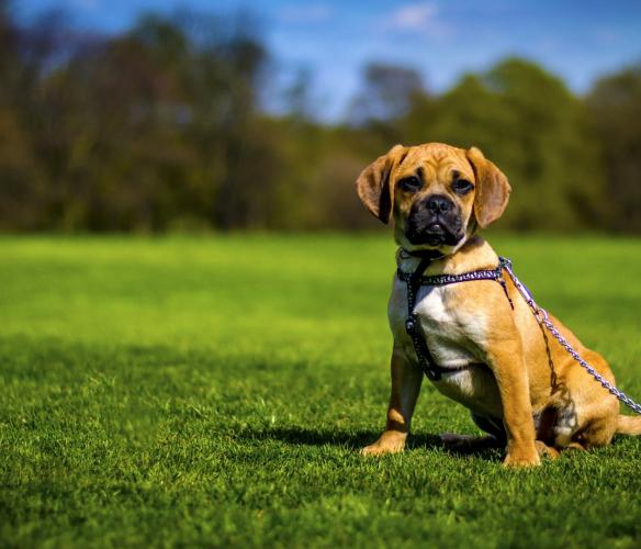 Залишити собаку на час прогулянки у Межигір'ї. Dogchill 🐶